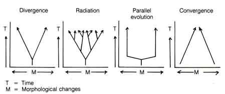 Can Microevolution Lead to Macroevolution ?